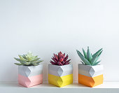 Cactus pot. Beautiful painted concrete pot. Red and green succulent plants in colorful modern triangle concrete planters on white wooden shelf on white wall background.