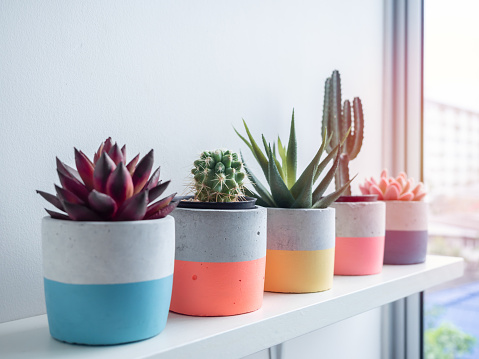 Cactus pot. Concrete pot. Close-up colorful round concrete planters with cactus and succulent plants on white wooden shelf near glass window.