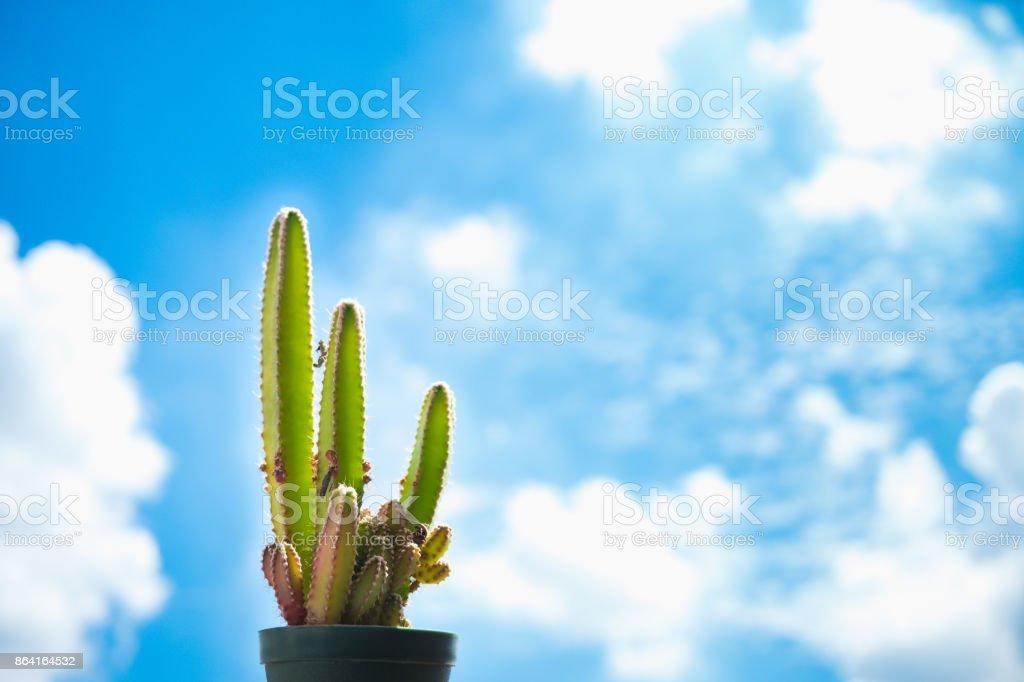 Cactus pot on blue sky background royalty-free stock photo
