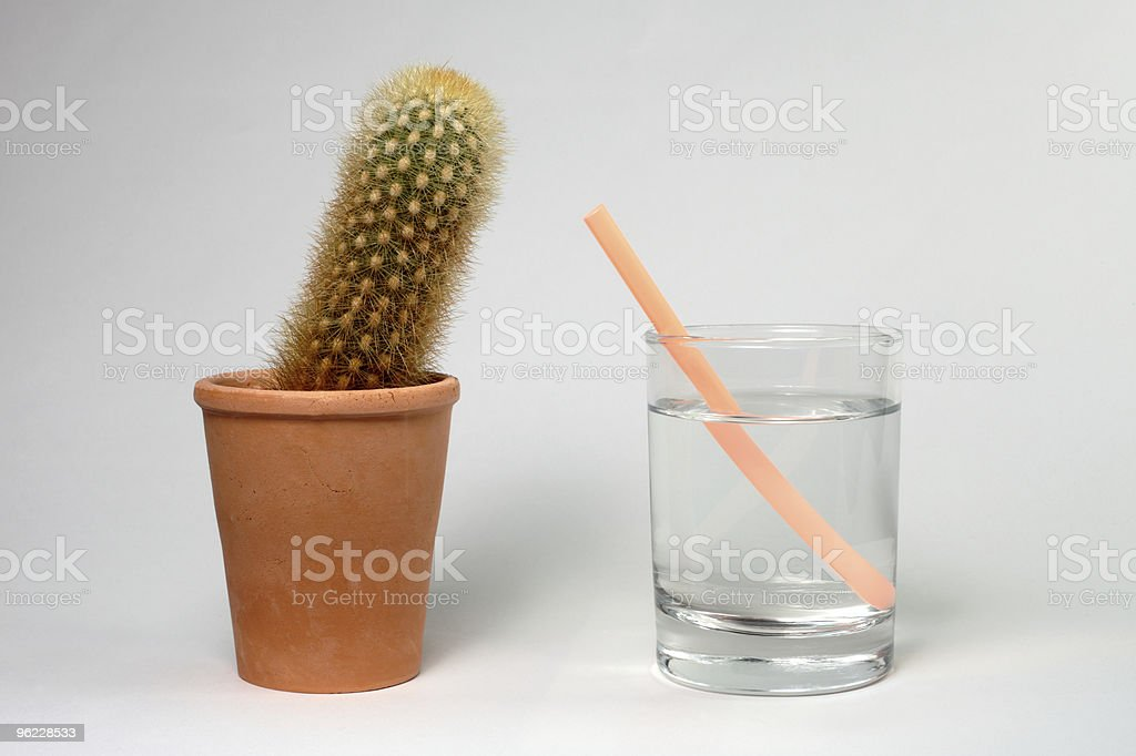 Cactus potted leaning towards straw in glass of water royalty-free stock photo