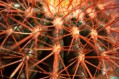 Cactus spikes , close up