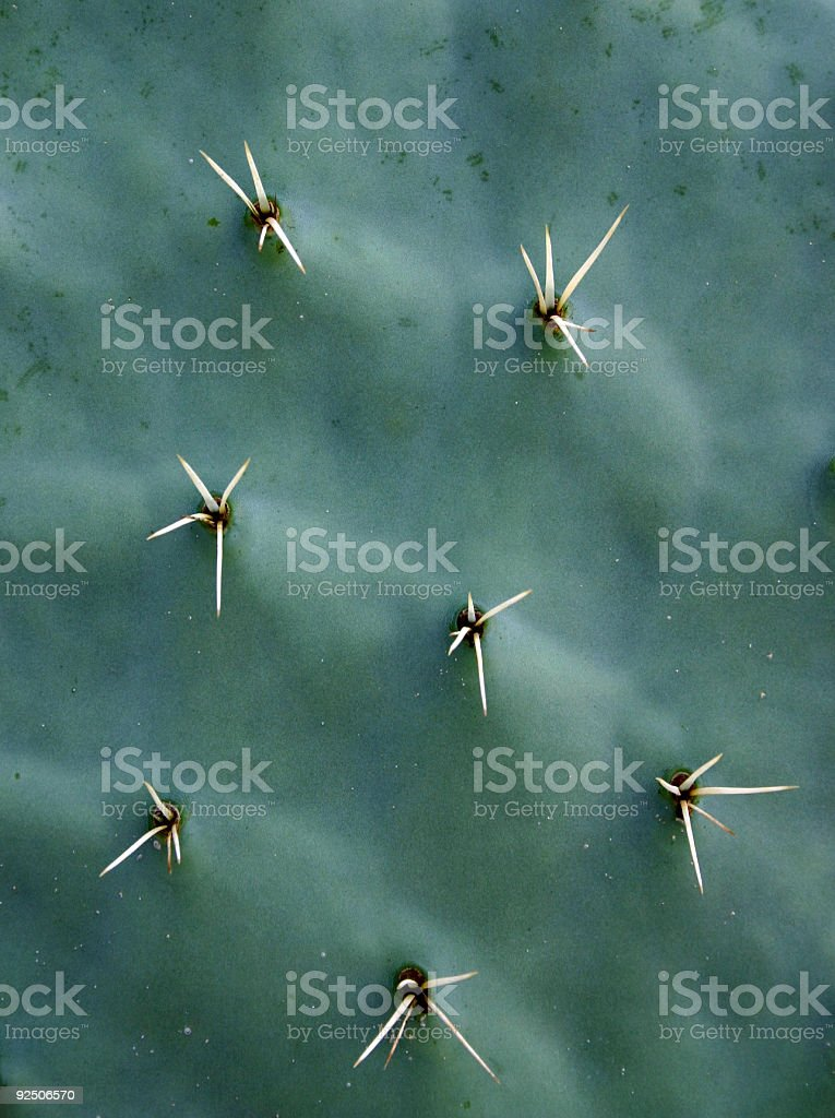 Cactus spines royalty-free stock photo