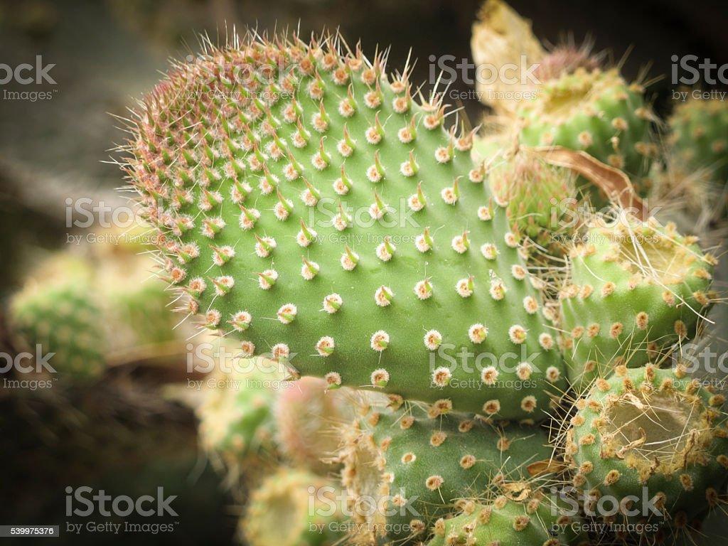 Cactus Stock Image stock photo