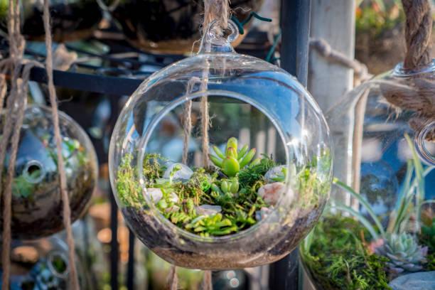 kaktus-terrarium auf dem markt - terrarienpflanzen stock-fotos und bilder