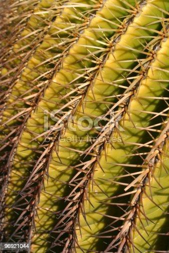 Cactus Thorns Stock Photo & More Pictures of Arboretum