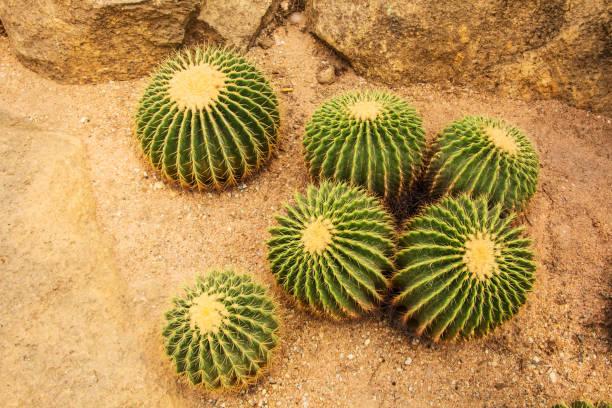 Cactus tree stock photo