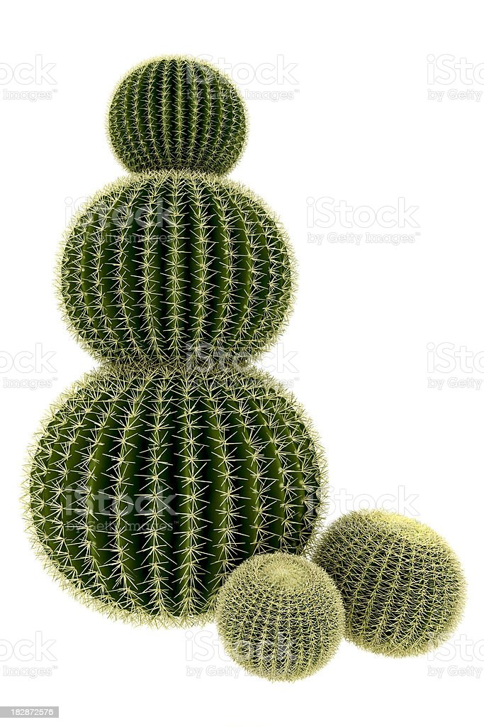 Cactus Tree Render Isolated on Pure White Background (XXXL) stock photo