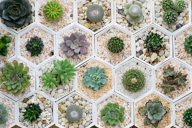 cactus variety stock photo