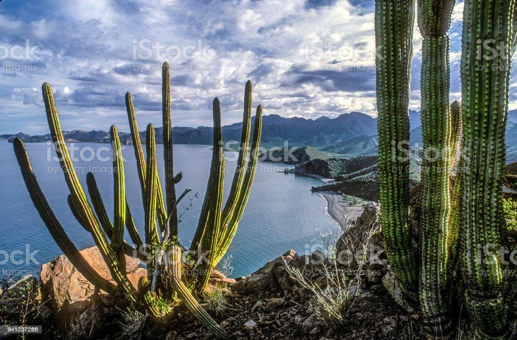 Punto de vista de cactus - foto de stock
