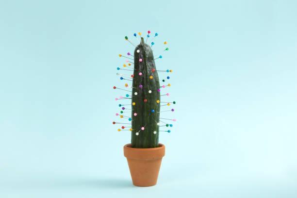 cactus voodoo stock photo
