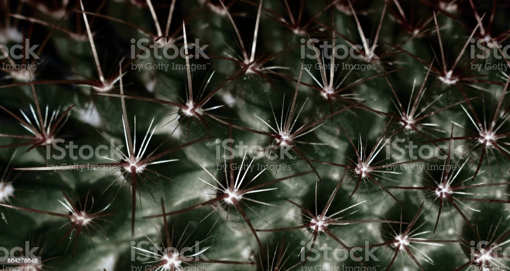 Cactus Wallpaper royalty-free stock photo