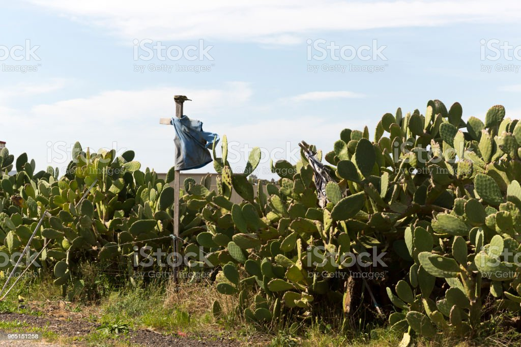 Cactus With A Crow Defender royalty-free stock photo