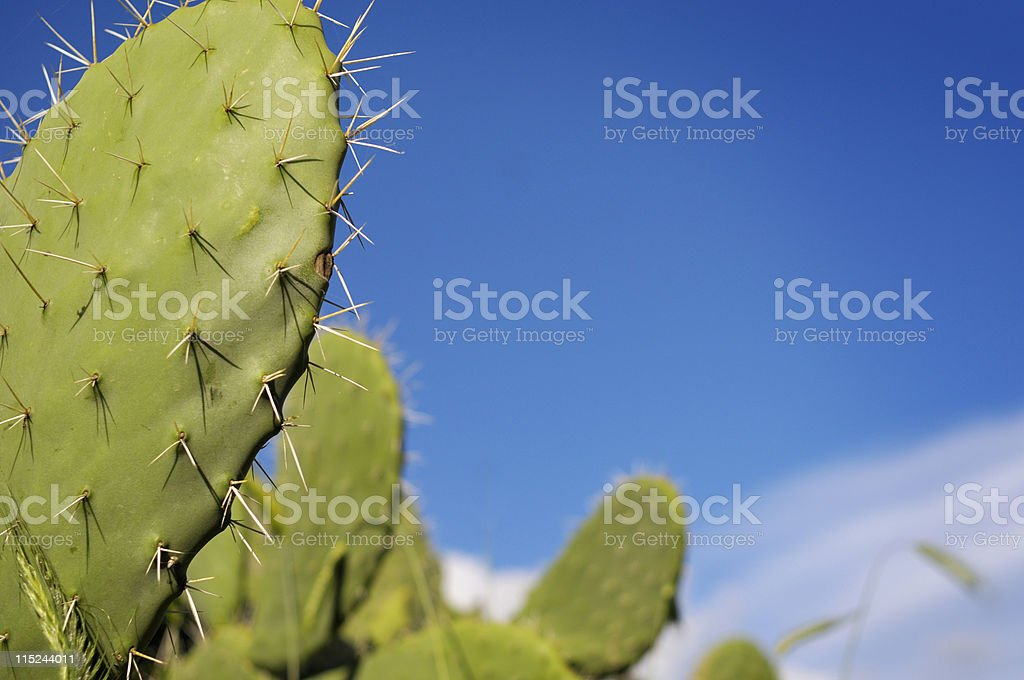 Cactus with blue sky stock photo