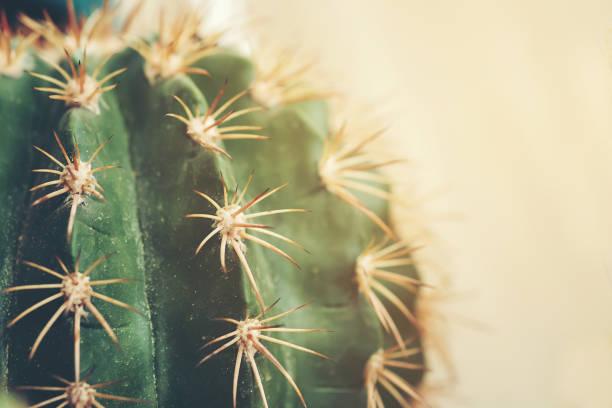 Kaktus mit interessanten Texturen und schön. – Foto