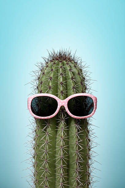 Cactus with pink sunglasses on blue stock photo
