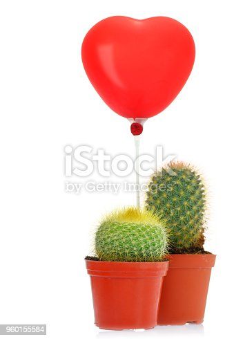 istock Cactus with read heart balloon 960155584