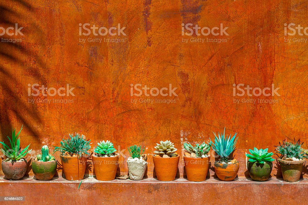 cactus with red wall stock photo