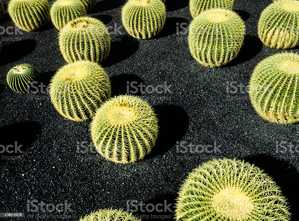 Cactuses growing in a cactus park stock photo