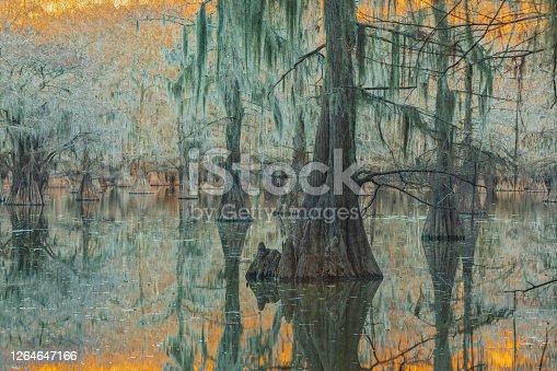 Winter at Caddo Lake, TX