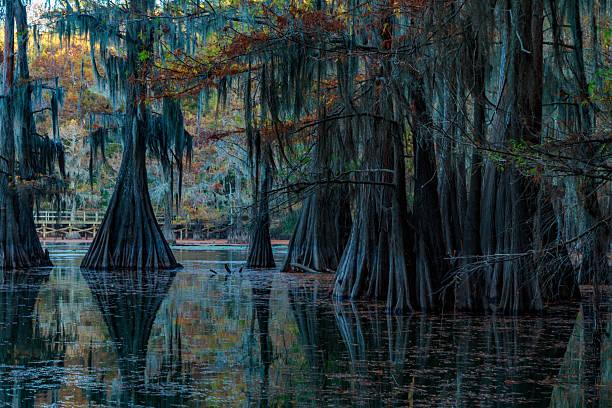 jezioro caddo - bagno zdjęcia i obrazy z banku zdjęć