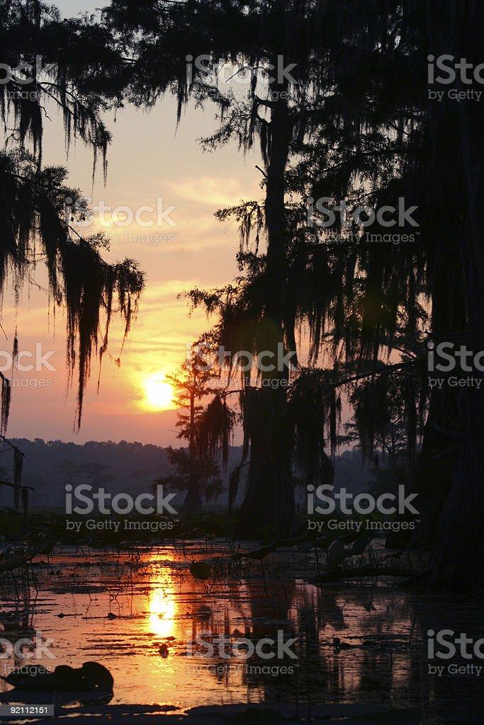 Caddo Lake Sunset royalty-free stock photo