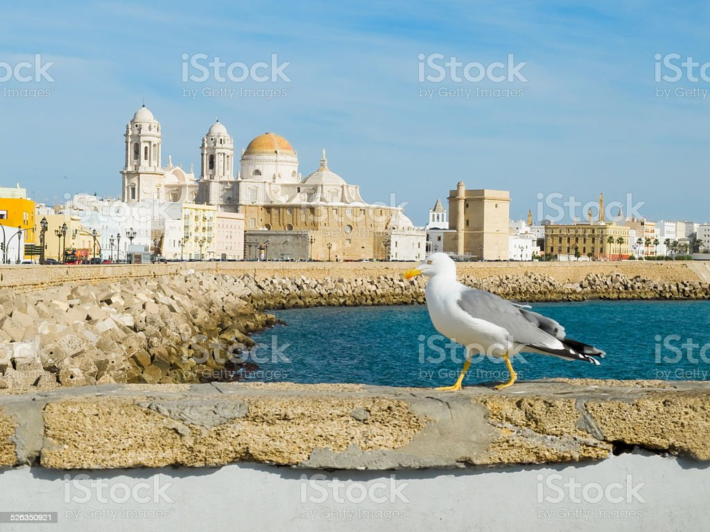 Cadiz Cathedral in Paseo Campo del Sur. Cadiz, Spain. stock photo