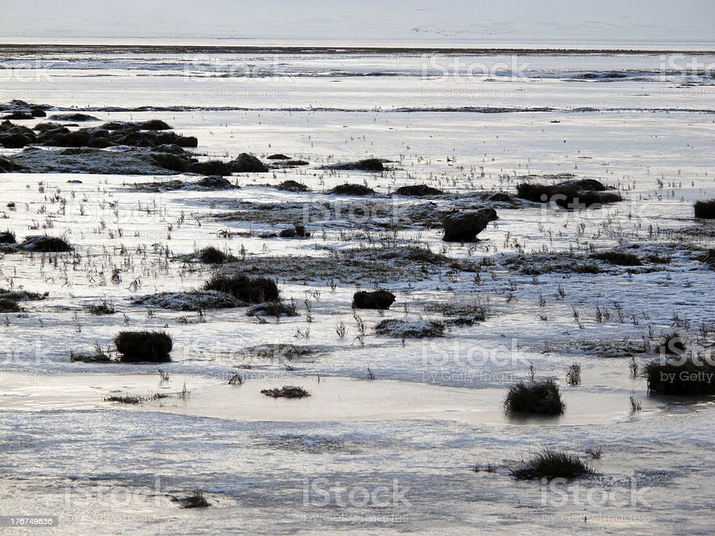 Caerlaverock National Nature Reserve the Solway Firth stock photo
