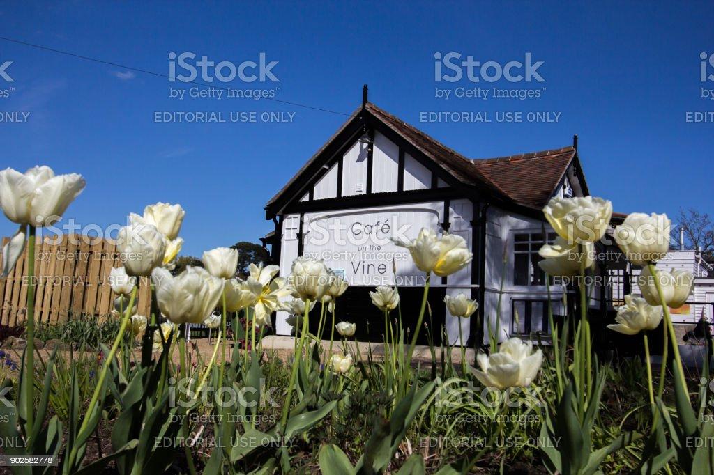 Cafe on the Vine in Sevenoaks, England stock photo