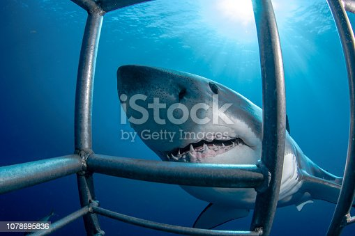 A Cage Diving in Guadalupe Island in Mexico