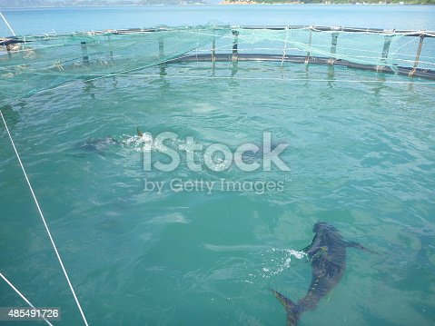 istock Cage farming of yellowfin tuna in the bay of Camranh 485491726