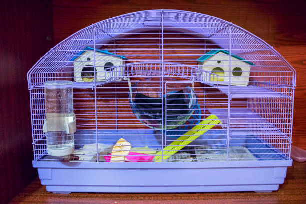 93 Hamster Cage Stock Photos, Pictures & Royalty-Free Images - iStock