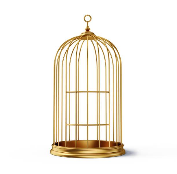 케이지 - 새 둥지 뉴스 사진 이미지