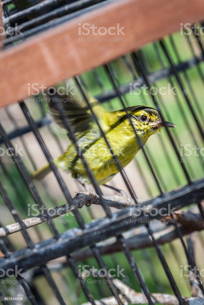 Caged bird foto