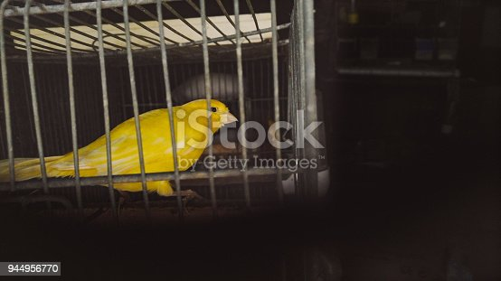 istock Caged Canary 944956770
