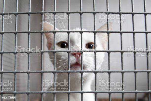 Caged cat picture id663471530?b=1&k=6&m=663471530&s=612x612&h=cnwky eqt2nkon08lhleenag18q0oe3pntiecgkdiso=