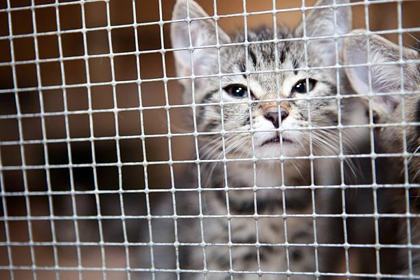 Caged cats picture id186707452?b=1&k=6&m=186707452&s=612x612&w=0&h=geccsd5ni4ve71wnapiniyflamm gzlds yq1wf8nlk=
