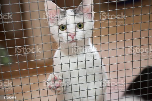 Caged kitten picture id187555575?b=1&k=6&m=187555575&s=612x612&h=ey axrv9npqbs2quldpoqcohcal10mpjjhq i5r61pm=