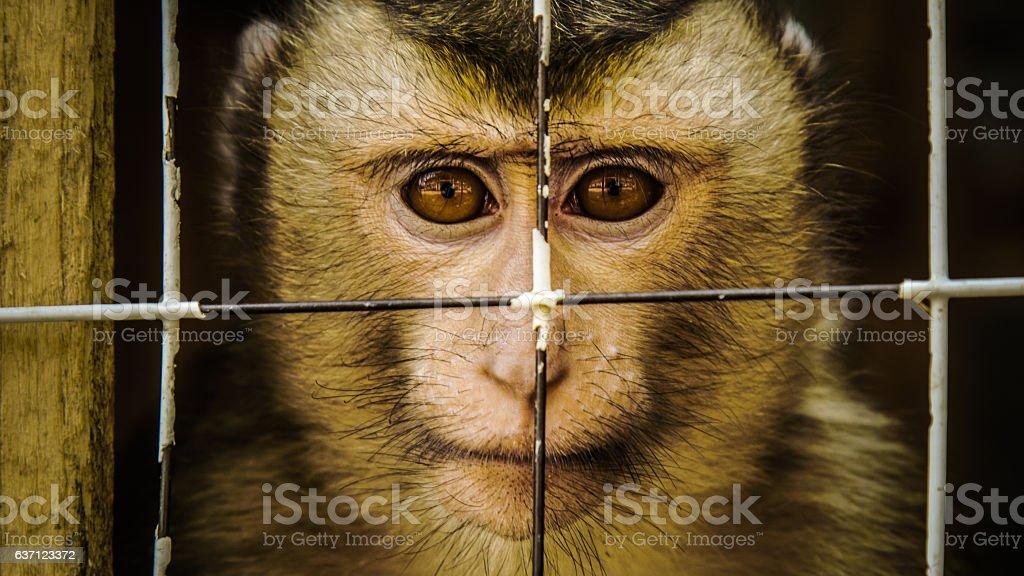 Caged Macaque stok fotoğrafı