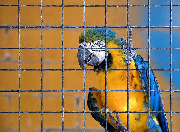 caged parrot stock photo