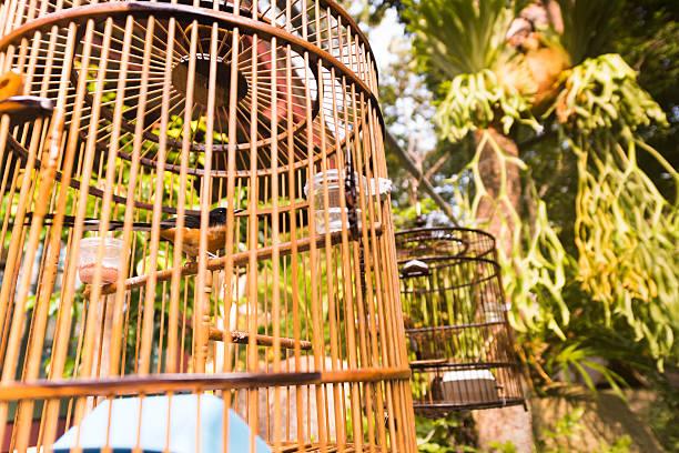 animaux en cage oiseaux captive de suspension thaïe traditionnelle se compose de cages à l'extérieur - oiseau chanteur photos et images de collection