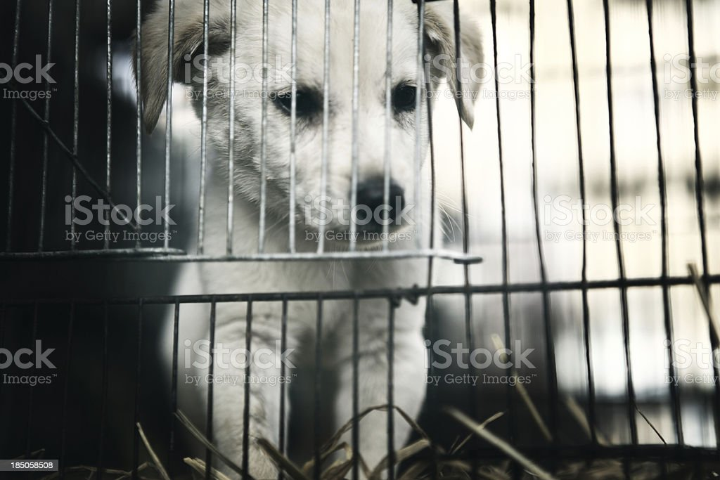 Caged Puppy in Pet Shop, Empress Market stock photo