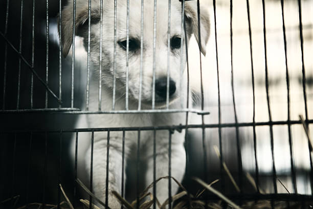 caged puppy in pet shop, empress market - pet shop and dogs not cats stock pictures, royalty-free photos & images
