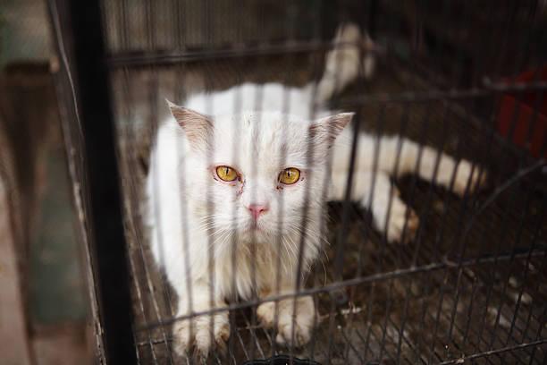 caged sad persian cat pet shop - kooi stockfoto's en -beelden