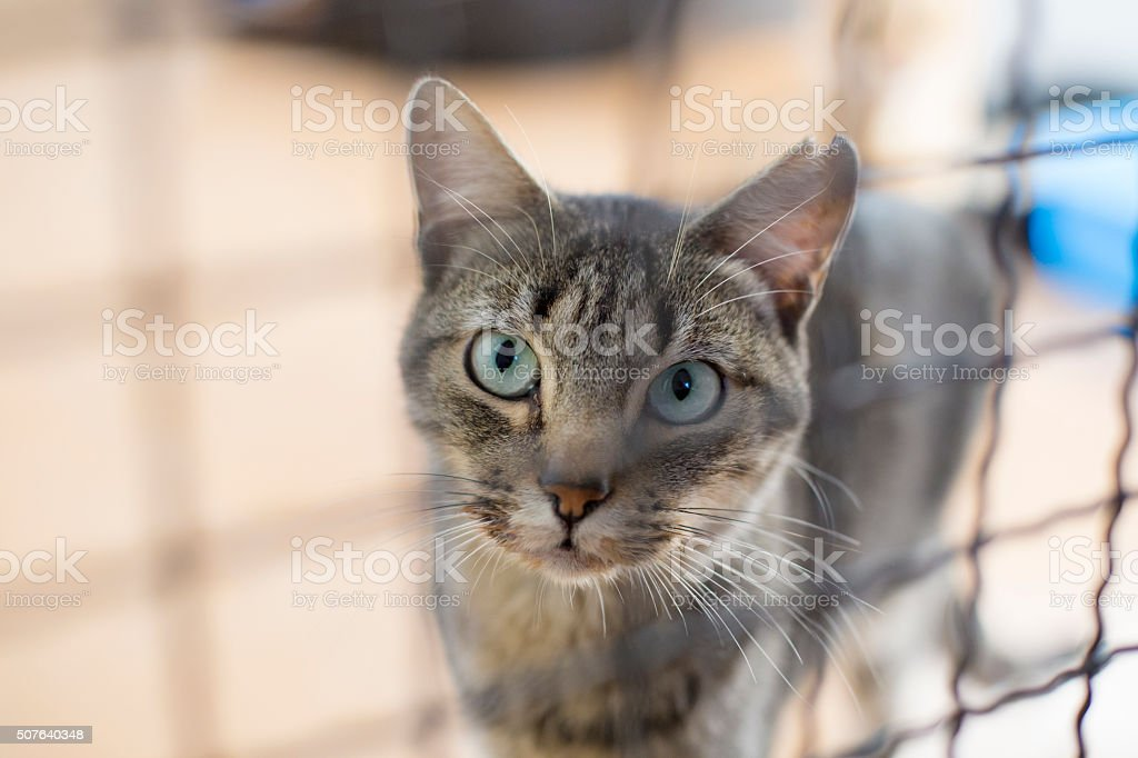 Caged tabby cat stock photo