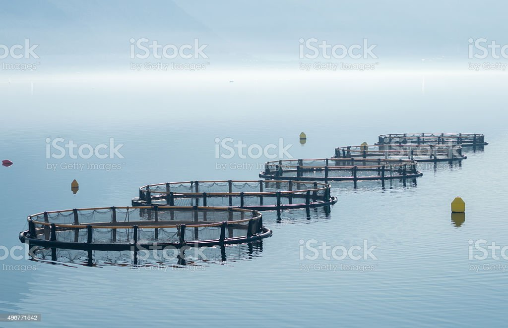 Cages for fish farming royalty-free stock photo