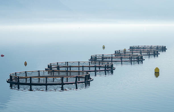 Cages for fish farming stock photo