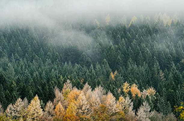 Cairngorms National Park stock photo