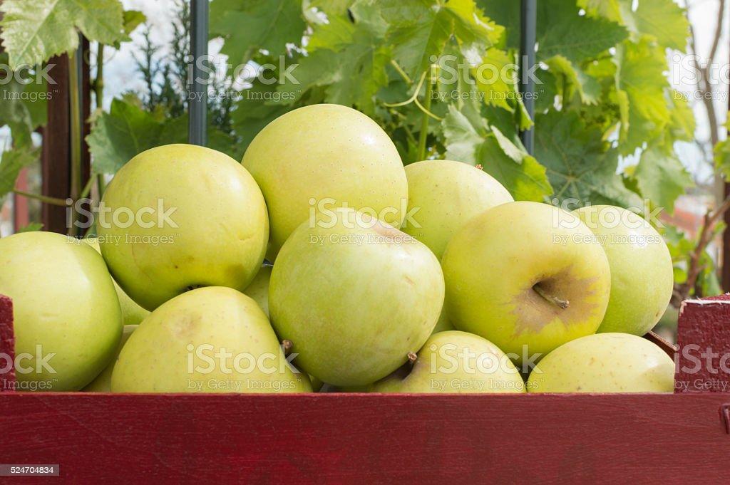 Caja con manzanas Verdes photo libre de droits