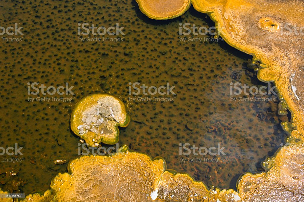 Calcification Texture Pattern Background stock photo