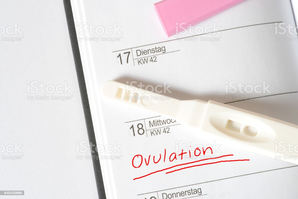 Ein Kalender und die Ovulation stock photo